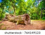 Tree Disease Deforestation...