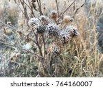 frozen plant herb. frost frost... | Shutterstock . vector #764160007