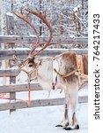 reindeer at farm in winter...   Shutterstock . vector #764217433