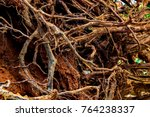 Small photo of Dirty root, Root wood over the soil., Fallen trees with roots