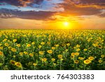 field of blooming sunflowers on ... | Shutterstock . vector #764303383