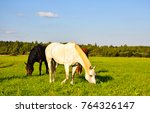 Stock photo horse herd grazing on pasture field 764326147