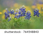 wildflower field with texas... | Shutterstock . vector #764548843