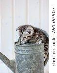 Little Kitten Plays On The...