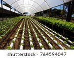 hydroponic cultivation of... | Shutterstock . vector #764594047