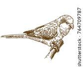 vector antique engraving... | Shutterstock .eps vector #764709787