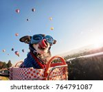 an adorable chihuahua in a... | Shutterstock . vector #764791087