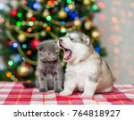 Stock photo yawning puppy and a kitten on a background of the christmas tree 764818927