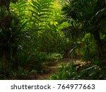 tropical garden path ... | Shutterstock . vector #764977663