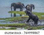 large elephant herd taking a... | Shutterstock . vector #764998867