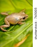 coqui native frogg from puerto... | Shutterstock . vector #765005