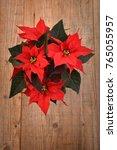 christmas flower  poinsettia on ...   Shutterstock . vector #765055957