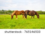 Stock photo two horses grazing in field 765146533
