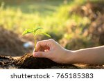 planting young tree in black... | Shutterstock . vector #765185383