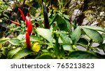 Small photo of The chili pepper from Nahuatl ch?lli is the fruit of plants from the genus Capsicum, members of the nightshade family, Solanaceae