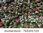 top view of flowerbed with... | Shutterstock . vector #765241723