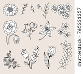 set of hand drawn sketches of... | Shutterstock .eps vector #765331357