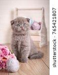 scottish kitten portrait. cat... | Shutterstock . vector #765421807