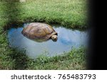 large graceful tortoise in blue ... | Shutterstock . vector #765483793