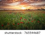 spring meadow with blossom... | Shutterstock . vector #765544687