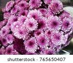 the texture of purple flower in ... | Shutterstock . vector #765650407