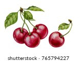 Cherry. Watercolor Botanical...