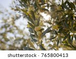 olives in the field   Shutterstock . vector #765800413