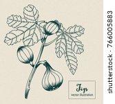 vector illustration of fig...   Shutterstock .eps vector #766005883