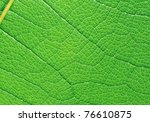 extreme macro of green leaf... | Shutterstock . vector #76610875