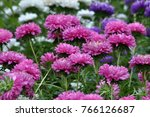 on the flowerbed in the autumn... | Shutterstock . vector #766126687