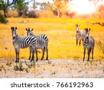 zebras standing and watching in ... | Shutterstock . vector #766192963