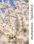 sakura   beautiful cherry... | Shutterstock . vector #766224613