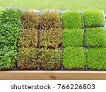 a microgreen is a young...   Shutterstock . vector #766226803