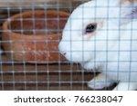 rabbit in the zoo.thailand | Shutterstock . vector #766238047
