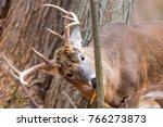 white tail buck deer in a... | Shutterstock . vector #766273873