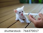 Stock photo hand feeding a cute orphaned baby white kitten with milk replacer in a syringe thailand 766370017