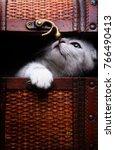 Stock photo cute kitten in wooden box postcard 766490413
