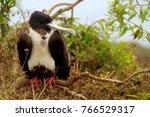 birds in isla de la plata ... | Shutterstock . vector #766529317