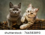 Stock photo  portrait kittens on a chair back 766583893