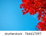 red maple leaf in the autumn... | Shutterstock . vector #766617397