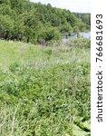 Small photo of Acrocephalus palustris. Nest Habitat of Marsh Warbler. Landscape. Russia