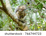 squirrel on a branch | Shutterstock . vector #766744723