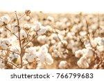 beautiful cotton fields from... | Shutterstock . vector #766799683