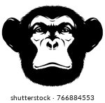 black and white linear paint...   Shutterstock . vector #766884553