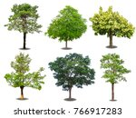 isolated of mix trees with... | Shutterstock . vector #766917283