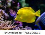 'bubbles' the yellow tang fish... | Shutterstock . vector #766920613