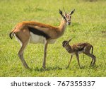 Image Of Antelope Thompson And...