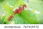 fresh mulberry  red unripe... | Shutterstock . vector #767419573