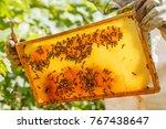 closeup portrait of beekeeper...   Shutterstock . vector #767438647