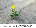 yellow flower growing on crack... | Shutterstock . vector #767486683